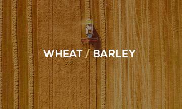 wheat/barley_weekly_opinion_graintab_crm